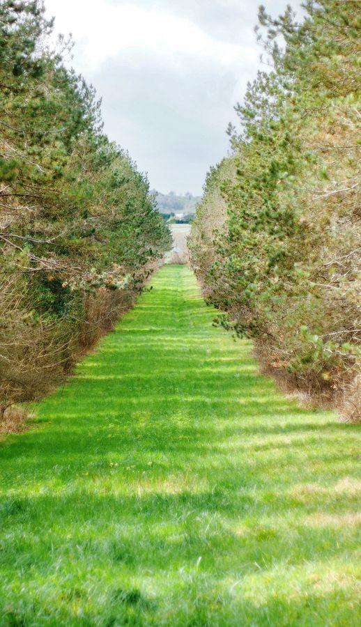 Un chemin vert entre deux rangées d'arbres, bien symétrique, découvert lors d'une ballade dans le Gers, dans le sud-ouest de la France.