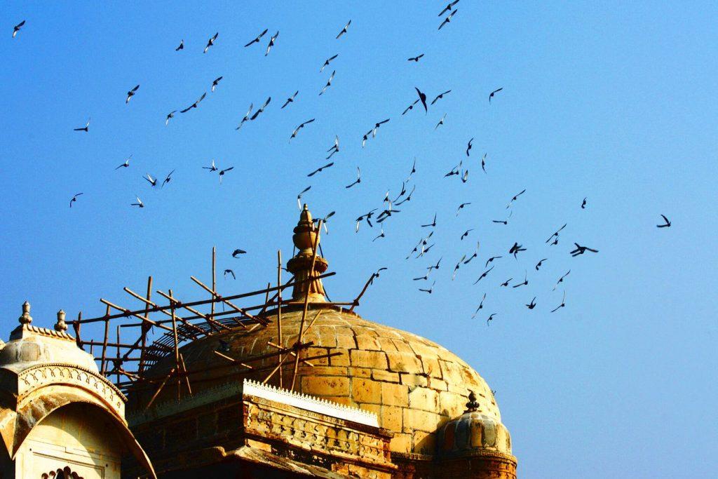 En Inde, des oiseaux s'apprêtent à se poser sur le toit d'une havelî à Udaipur au Rajasthan. Le toit est recouvert d 'un échafaudage en bambou.
