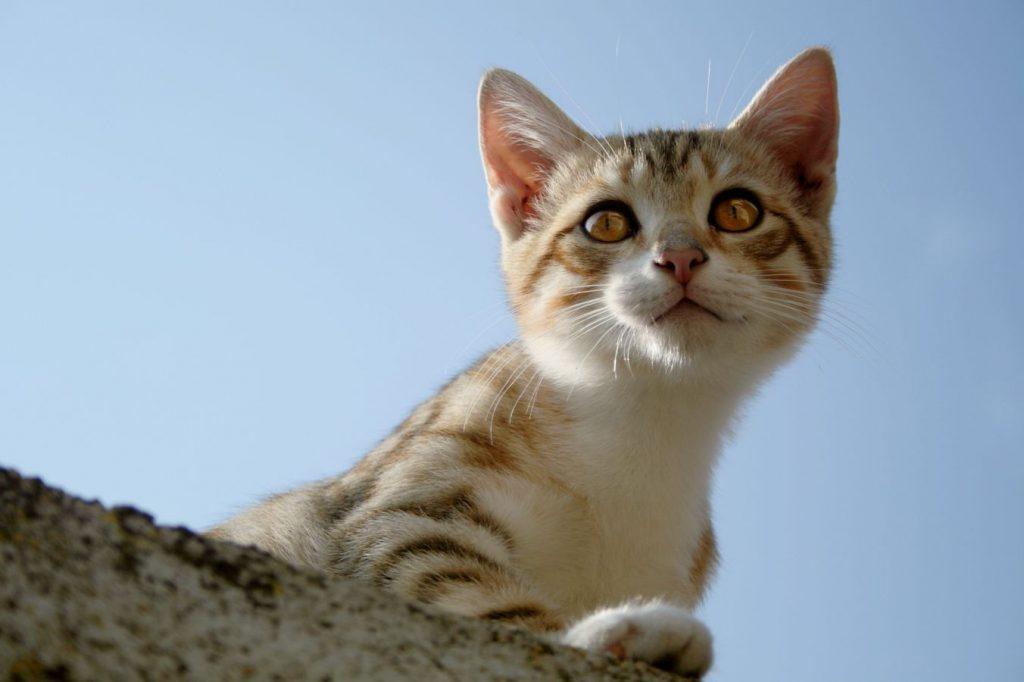 Un chaton se prélassait au soleil sur le haut d'un muret. Ces yeux sont mordorés et derrière, le ciel est tellement clair qu'il en est presque blanc.