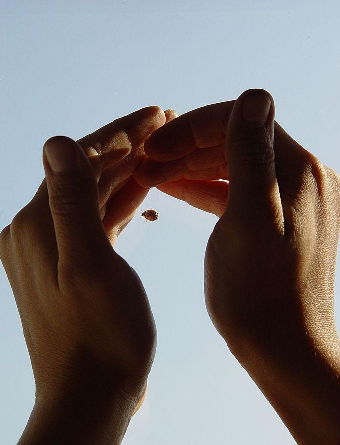 Une coccinelle est en l'air entourée de mains. La coccinelle était posée sur une vitre et les mains l'ont empêché de décoller le temps de prendre la photo.