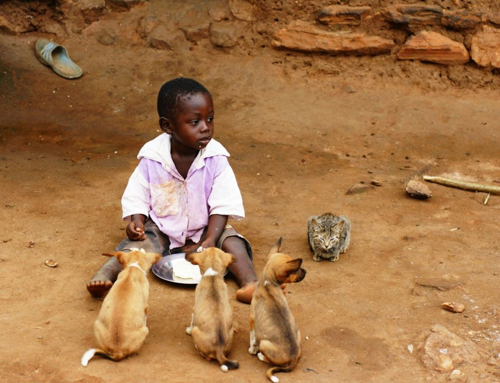 Un enfant togolais mange à même le sol dans un village. À côté de lui, trois chiens et un chat attendaient patiemment, au cas où il y aurait des restes.