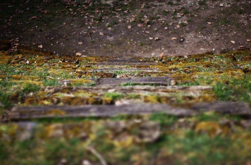 Un escalier d'herbe descend vers le centre de l'amphithéâtre du fort de Montessuy à Caluire-et-Cuire. Sur les côté, les gradins sont recouverts de mousse.