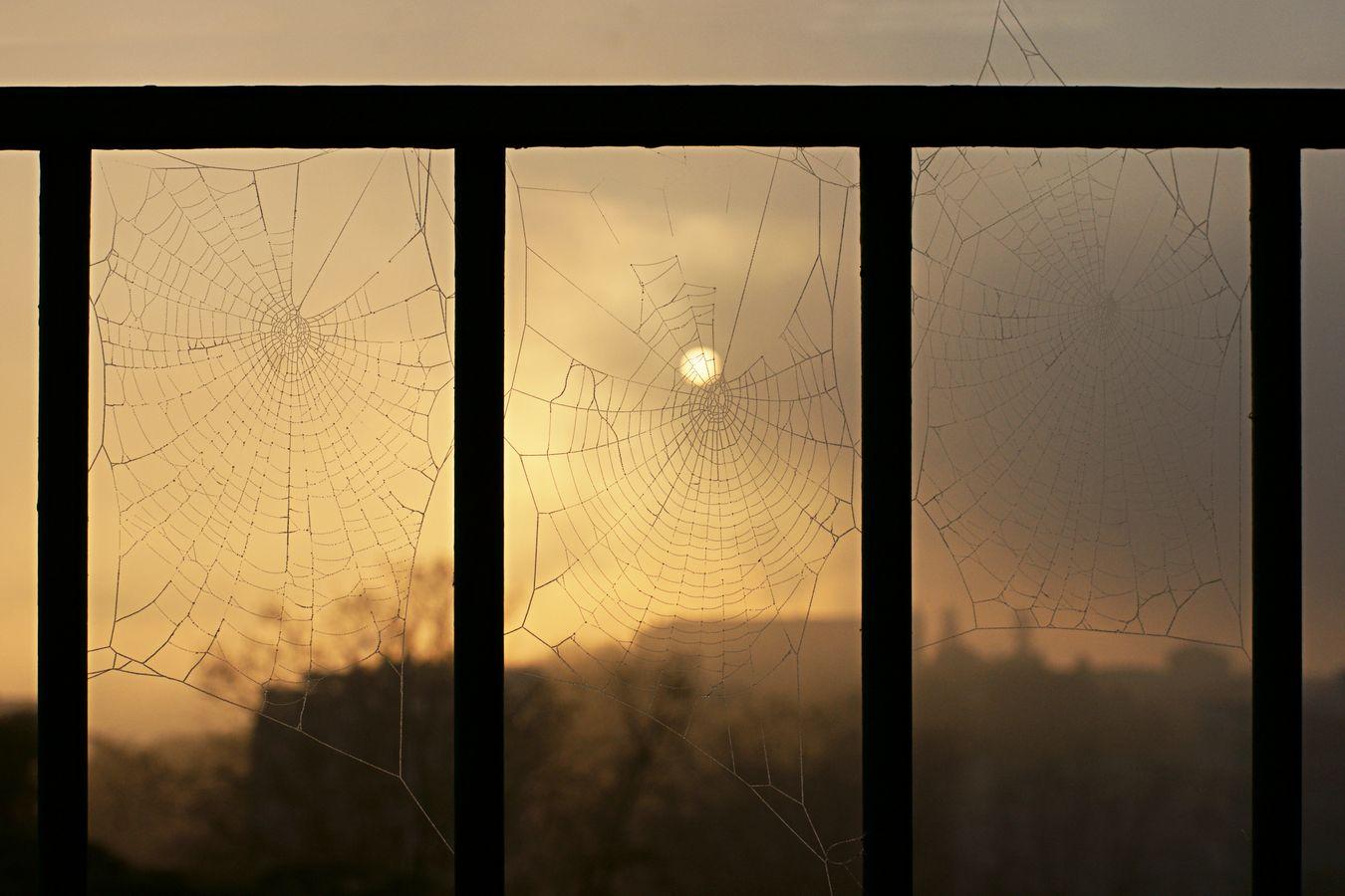 Trois toiles d'araignée couvertes de givre s'étalent, cote à cote entre les barreaux de la rambarde de mon balcon, chez moi, à Caluire-et-Cuire. Au loin, le soleil se lève au dessus de la silhouette de la ville.
